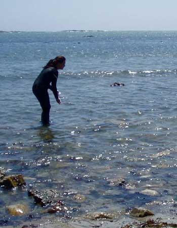 Jennifer Cossaboon recoge muestras de pelo de elefante marino