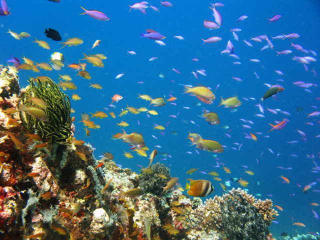 biodiversidad marina en Danjugan Island, Filipinas