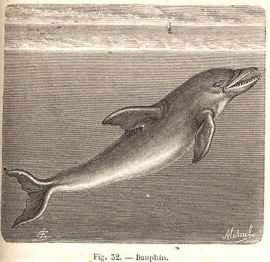 delfín dentado