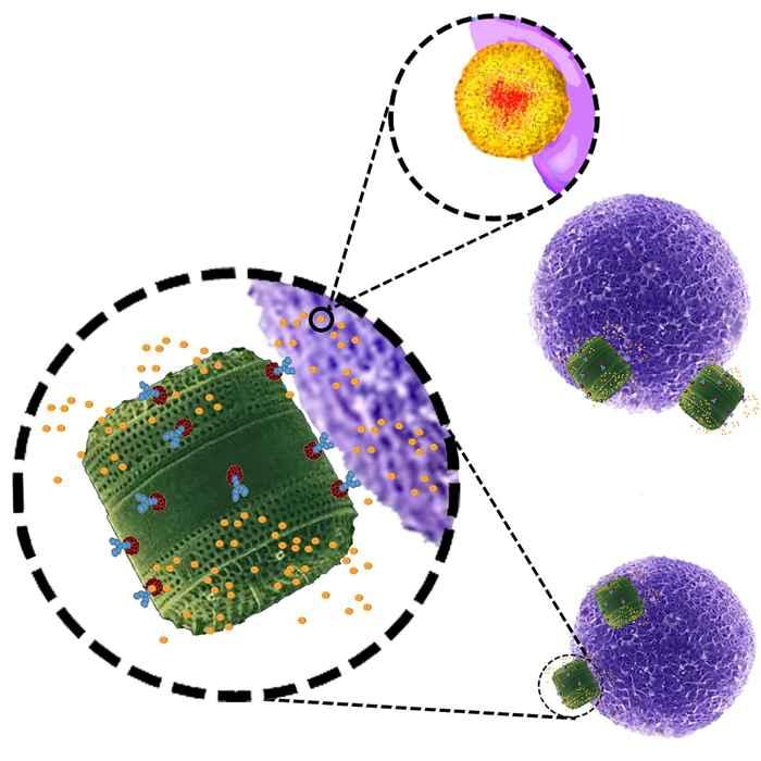 diatomeas contra el cáncer