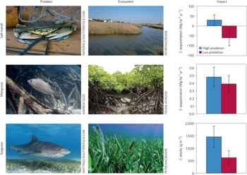 disminución y abundancia de especies depredadoras