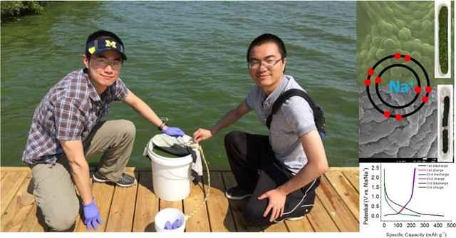el Dr. Deng recogiendo algas nocivas en el lago Eire