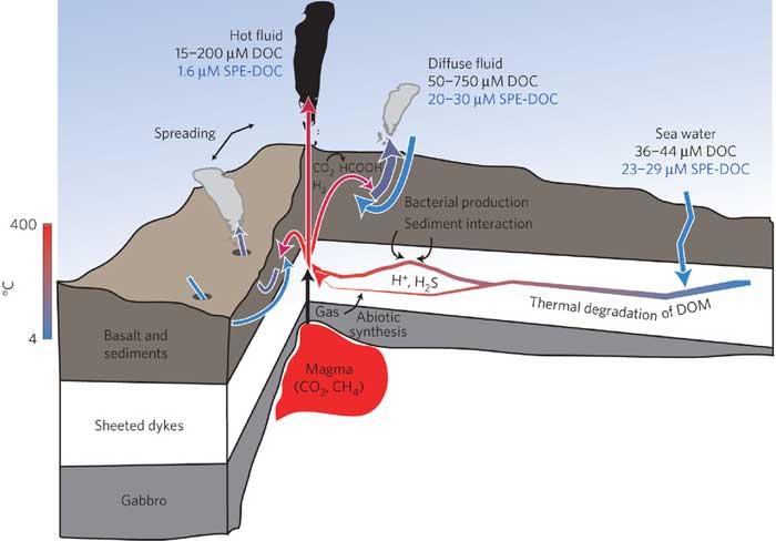 esquema del DOC en respiradero hidrotermal