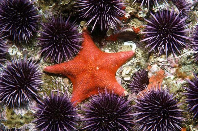 estrella y erizos de mar