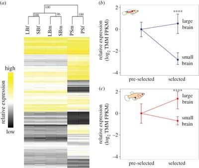 expresión genes en el guppy