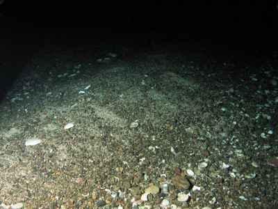 fondos marinos de Escocia