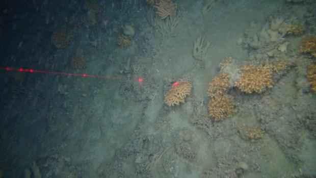 fondo marino del norte de Escocia