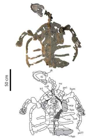 fósil de Desmatochelys padillai