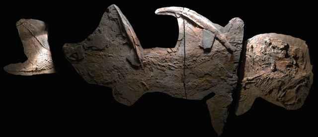 fósil de tiburón gigante de Texas