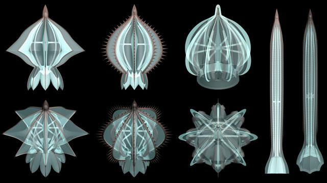 fósiles de medusas peine del Cámbrico