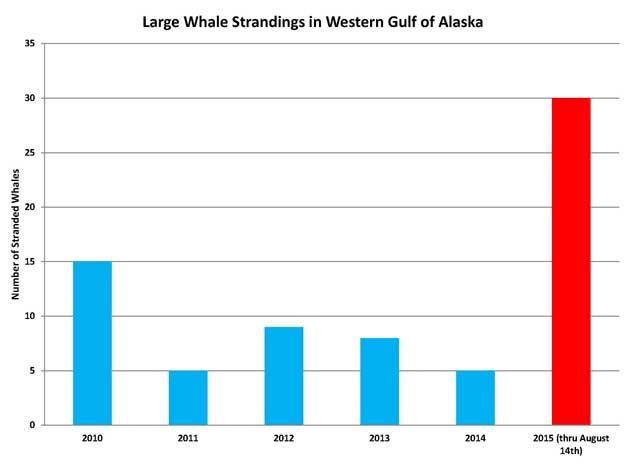 gráfico de ballenas varadas en Alaska