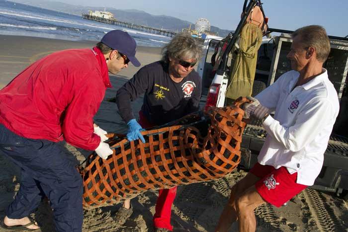 la guardia costera rescata a un león marino