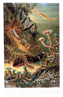 gusanos marinos poliquetos