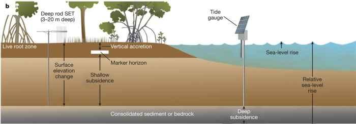 Los bosques de manglares se están quedando sin barro