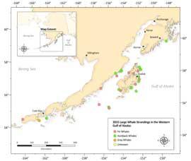 mapa de mortandad inusual en zonas de Alaska