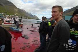 matanza de ballenas piloto en las Islas Feroe
