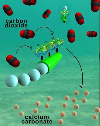 micromotores podrían reducir CO2 del océano