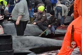 niños cabalgando encima de una ballena piloto