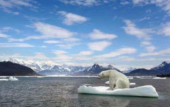 osos polares y emisiones de gases de efecto invernadero