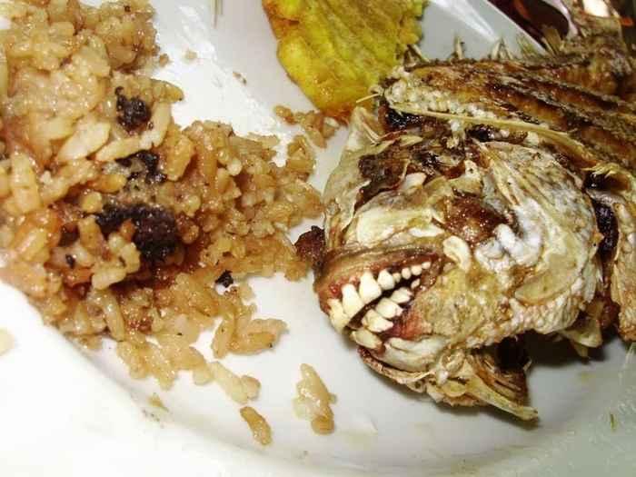 cadáver de pez pacú, detalle de los dientes