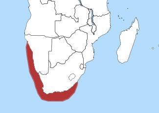 distribución del pingüino africano (Spheniscus demersus)