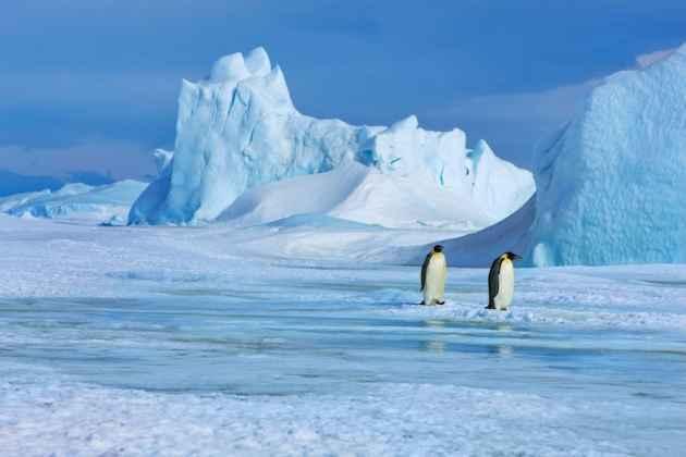 pingüinos en la capa de hielo de la Antártida