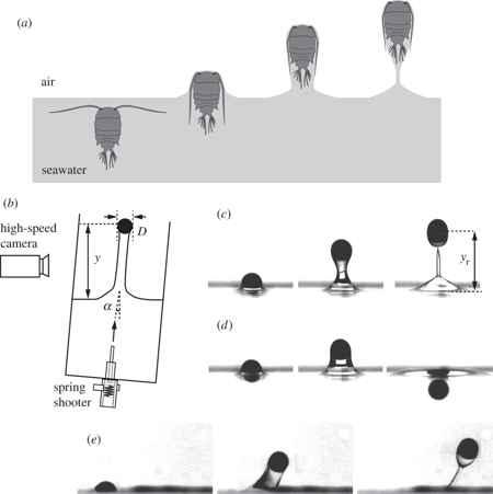 plancton puede saltar fuera del agua