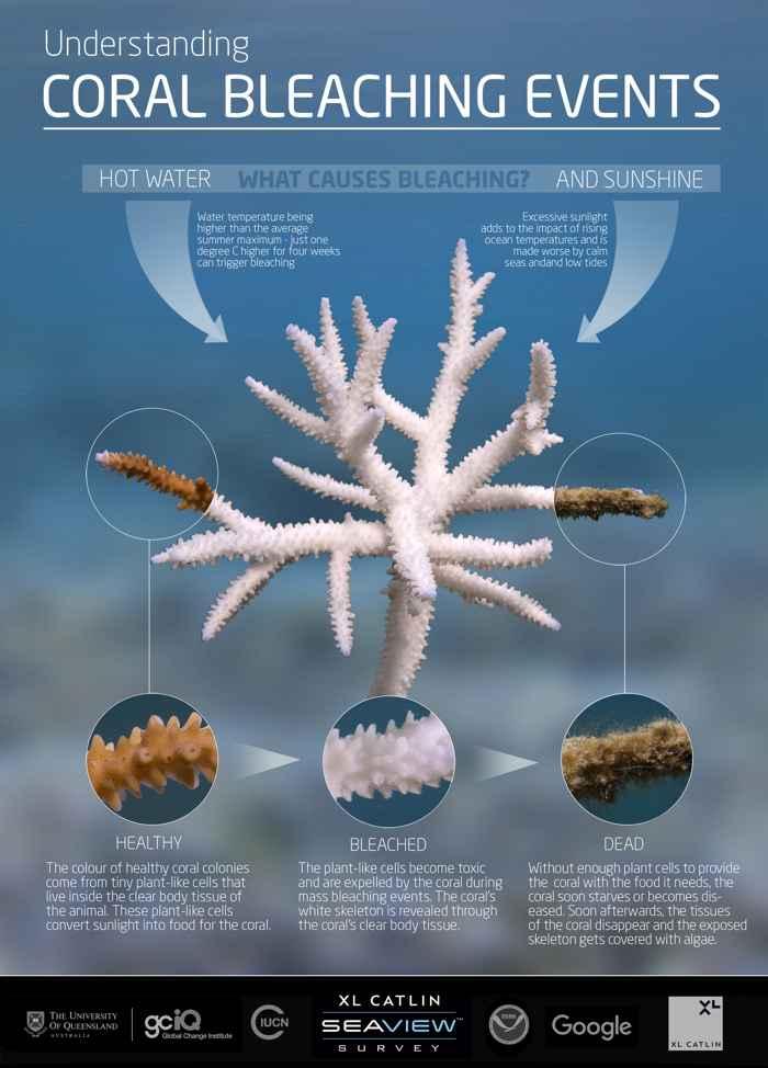 proceso de blanqueamiento de los corales