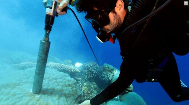 recogiendo muestras de coral