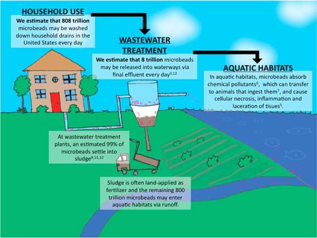 recorrido de los microplásticos hasta el océano