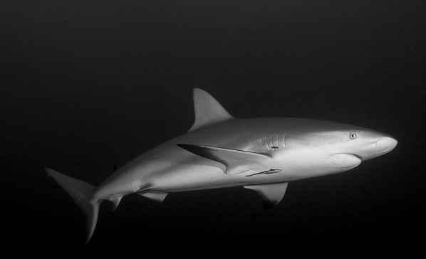tiburones en la noche