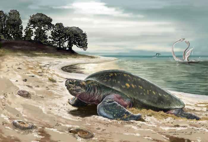 tortuga Desmatochelys padillai, recreación
