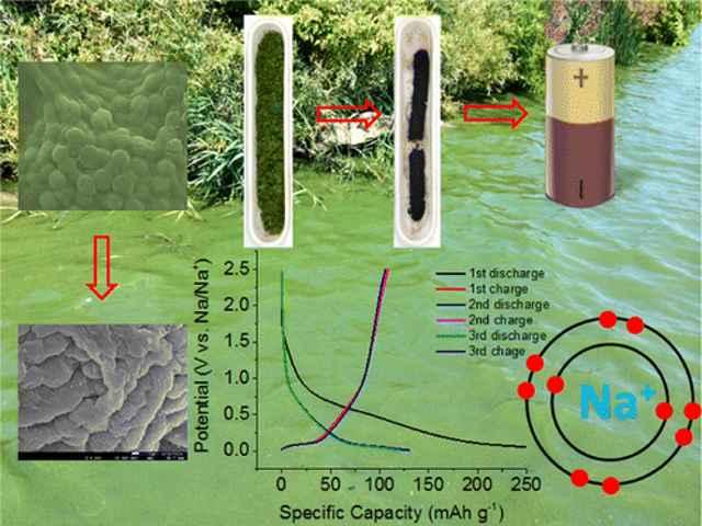 transformación de algas tóxicas en baterías de alto rendimiento