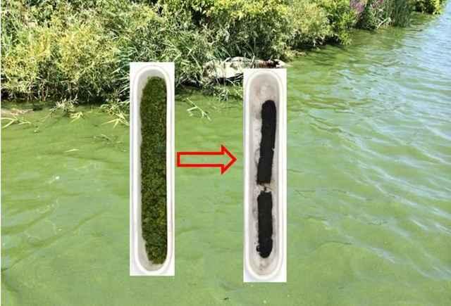 transformación de algas toxicas en carbono duro