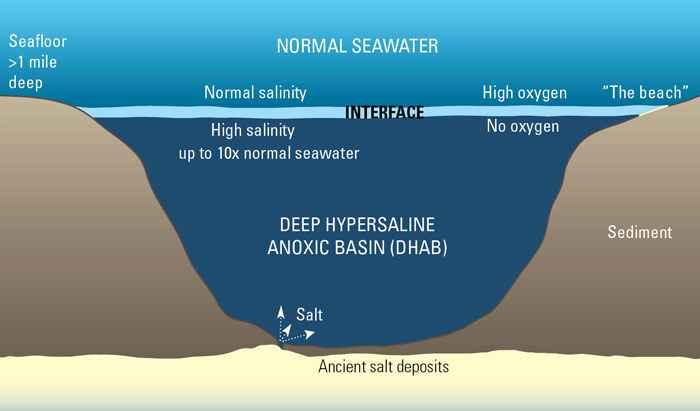 cuenca anóxica hipersalina profunda (DHAB)