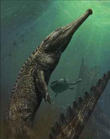 reconstrucción del Machimosaurus rex