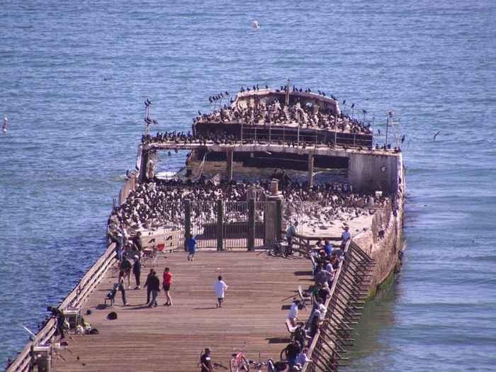 SS Palo Alto en Seacliff State Beach, California