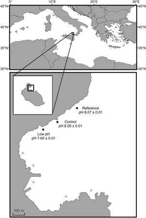 área de estudio del Hexaplex trunculus