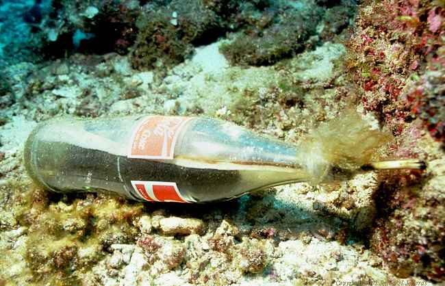 botella bomba para pesca