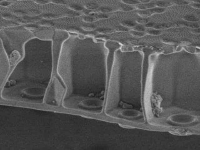 sección de la cáscara de sílice de una diatomea