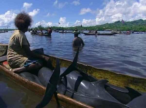 caza de delfines en las Islas Salomón