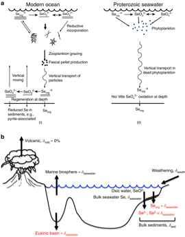 ciclo del selenio en la antigua Tierra