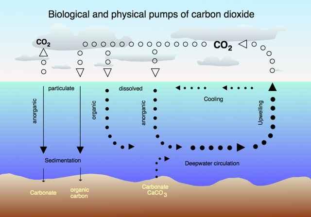 circulación CO2 océano-atmosfera