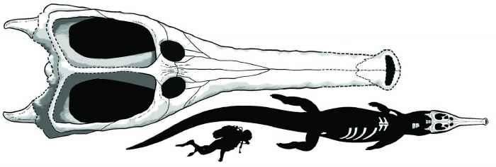 comparación de cráneo de Machimosaurus rex
