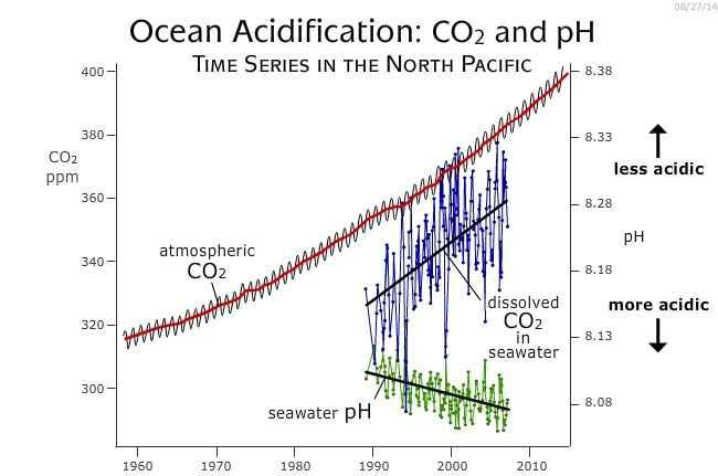 aumento de las concentraciones de CO2 en el océano