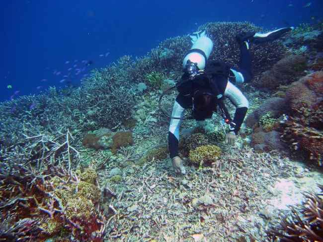 corales dañados por la pesca con explosivos