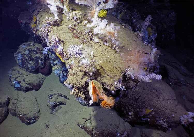 corales en un tubo de lava submarina