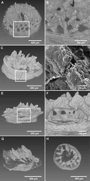 deformación del esqueleto de los corales