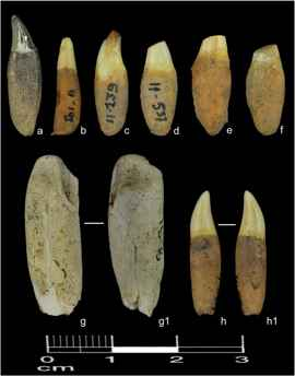 dientes de delfines encontrados en vertedero prehistorico