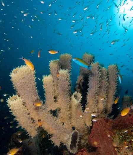 esponja marina